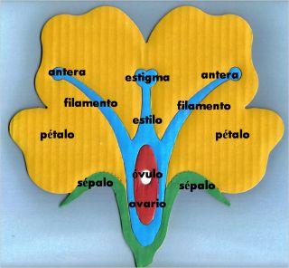 partes de la flor | reciclaycuentacuentos