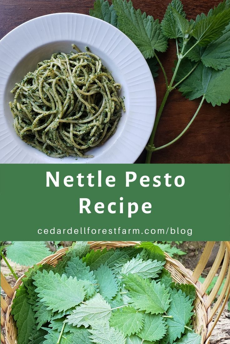Recipe Nettles