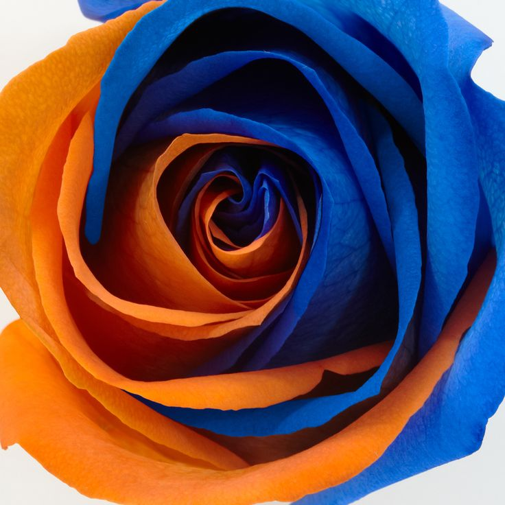 orange and blue wedding - Bing Images. . i wish this was real