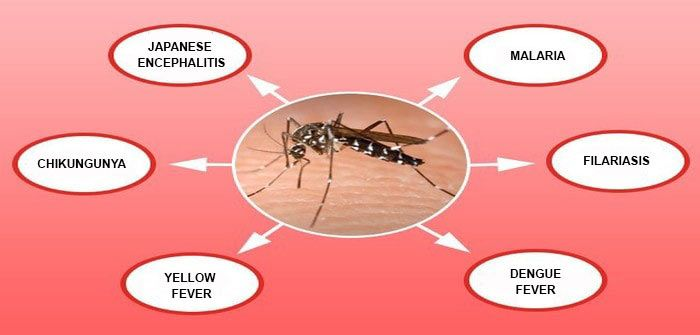 #Mosquito Borne Diseases Symptoms, Prevention and Treatment #zika #dengue…
