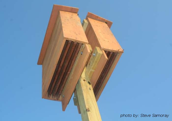 Install a Bat House. Conserve our bats!!! White nose syndrome is killing off our bats in numbers up to 98% for certain species in affected areas. No bats=no natural way for farmers to fight pests=increased costs and increased pesticides.