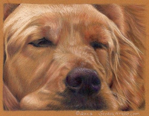 how to draw dog hair with colored pencils