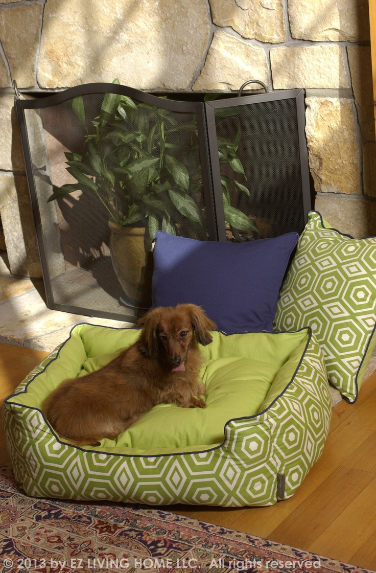 A simple update for the pet family living room.  Using green in your home decoration will benefit stabilizing health and encourage well-being.  Green brings the aura of grassy fields indoors, along with that clean feeling of spring and summer.