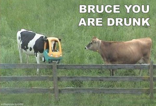funny lol-animals: Make Me Laughing, Funny Pictures, Cow Humor, Funny Cow, Funny Stuff, Too Funny, Funny Animal, So Funny, Funnystuff