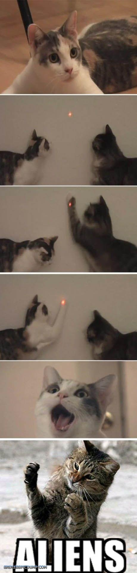 Cats Laserpointer Is Aliens Click the image for even more on EndlessPicdump.com