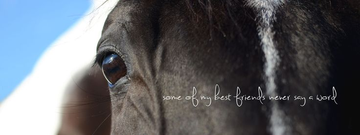 Horse Quotes Best Friend Photography Animals Pinterest