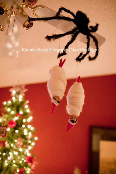 Elf on the Shelf idea - Elf caught by a spider. Now I know what to do with those pesky Christmas Elves..