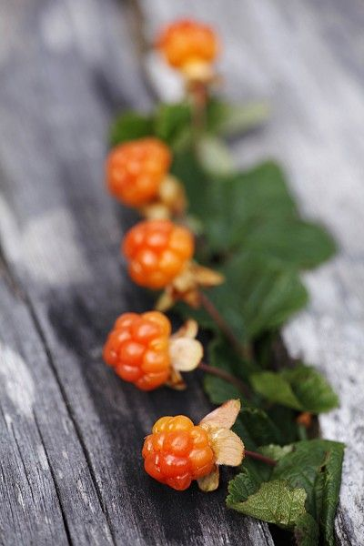 Cloudberries. Similar to raspberry or blackberry.