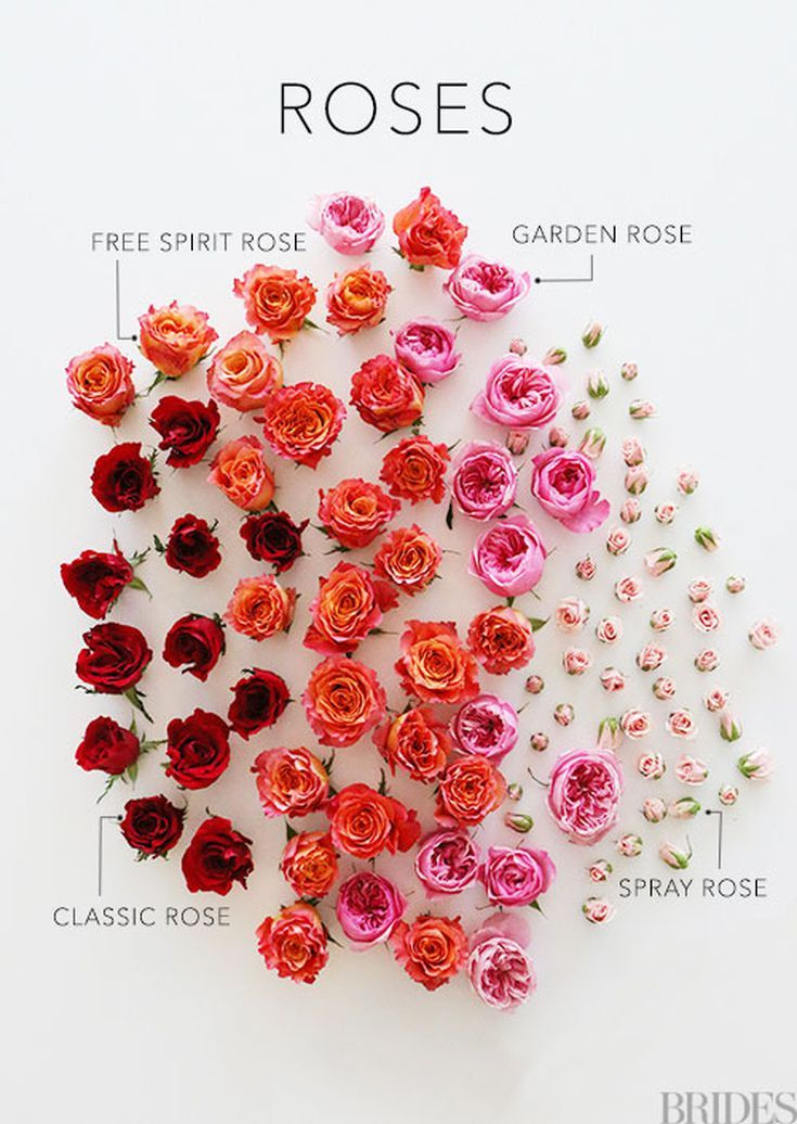 32 Impossibly Pretty Rose Bouquets Types Of Roses Rose Varieties Different Types Of Flowers