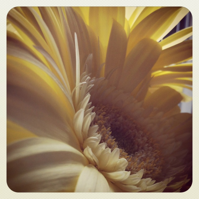 The perfect Daisy and perfect sunlight...