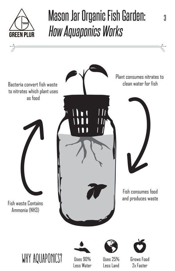 Mason Jar poisson jardin bureau aquaponie et jardin par GreenPLUR