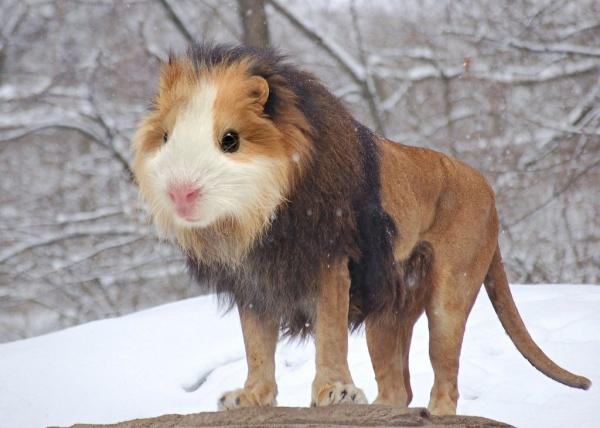 Забавный симбиоз животных