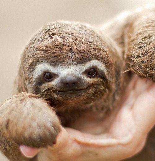 #sloth #smile aww!!