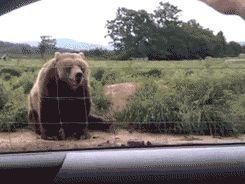 gif oso saludando - Buscar con Google