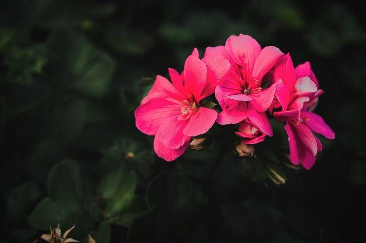 #somethingpretty #instaflowers #flowerstagram #instagramza #instagram_sa #southafrica #southafricaza #foreversouthafrica #fortheloveofphotography #photography #photobug #photoshare #photographer #canonphotography #canonphoto #loves_southafrica #pixel_panda #pixel_panda_za #kznmidlands #naturephotography #naturelover #blossom #rsa_outdoors #nature #shotzdelight #bestnatureshot #myshotz