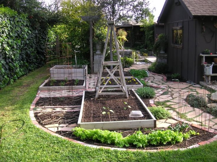 Vegetable gardens do not have to be a big rectangle...case in point.