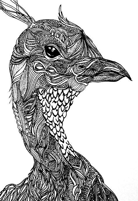 Line Art Zentangle : Best zentangle animal art images on pinterest doodles