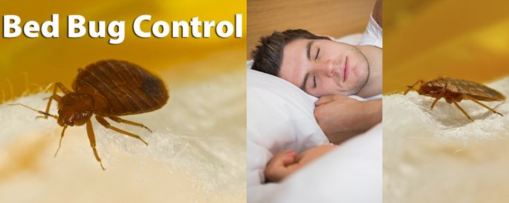 24/7 Bed Bug Pest Control Emergency Service Available #Emergency #Technology #Control #Hamilton