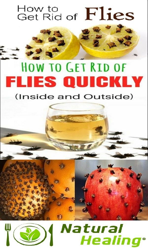best 25 get rid of flies ideas on pinterest. Black Bedroom Furniture Sets. Home Design Ideas