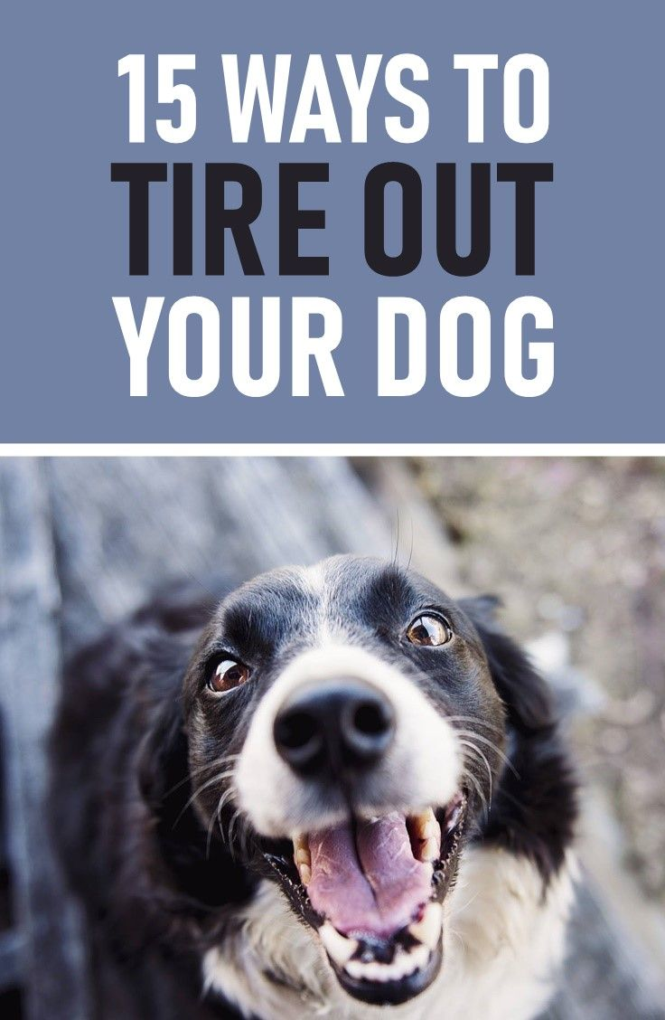 Here Are 15 Fun Games To Tire Out Your Dog Dogs Need Physical And
