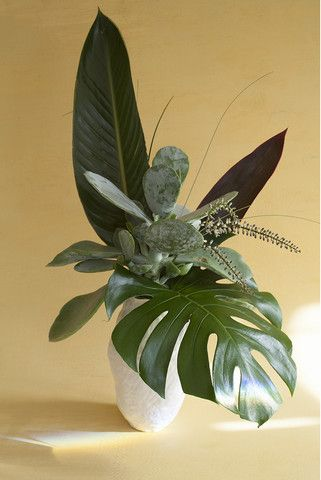 Swiss Cheese Plant – Homebase Collections
