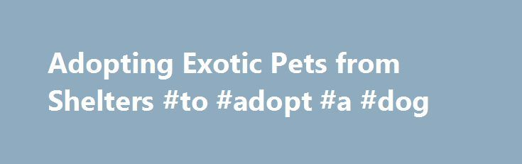 Adopting Exotic Pets from Shelters #to #adopt #a #dog http://pet.remmont.com/adopting-exotic-pets-from-shelters-to-adopt-a-dog/  Your Next Exotic Pet Could Come From a Shelter or Rescue By Lianne McLeod, DVM. Exotic Pets Expert Not Just for Cats and DogsMany people think of their local shelter when they are looking for a dog or cat, but did you know your local animal shelter can be a good place to find exotic pets, too? Shelters and rescues are often overlooked as potential sources for…