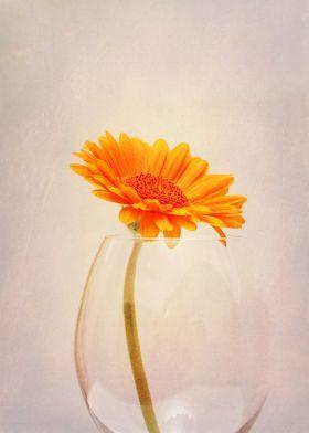 gerbera in a Wine Glass