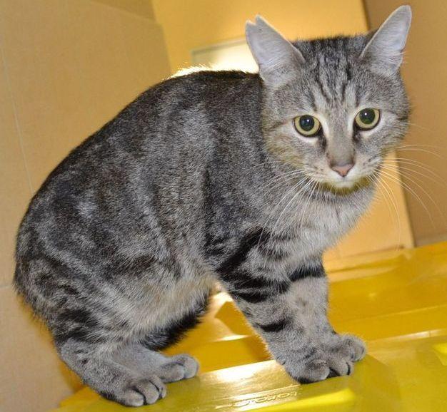 "Вафа. Кошка, метис, самка, около 2-3 лет. Тема на форуме Благотворительного Фонда ""Сохрани Жизнь"" - http://save-life.me/forum/viewtopic.php?f=22&t=4235 . Нашла Дом!"