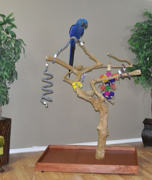 152 Best Images About Bird Play Stands On Pinterest