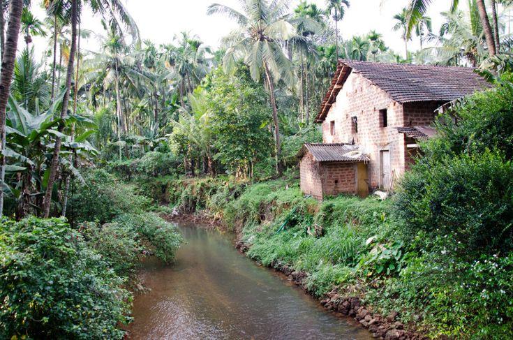 Goan spice plantations