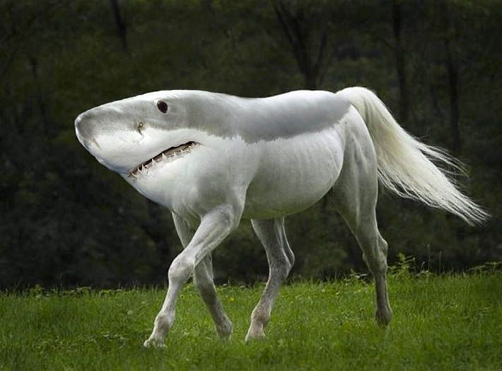 Hilarious New Animal Species Created in Photoshop