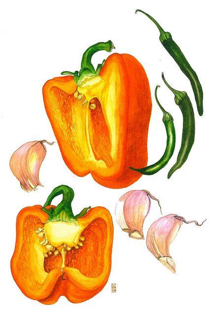 I like botanical drawings