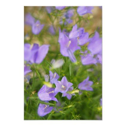 Purple Wildflowers Flower Poster - purple floral style gifts flower flowers diy customize unique