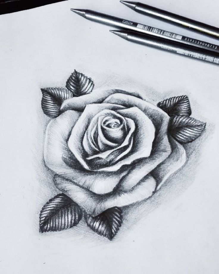 Kapusta2 #rosetattoo #realistic #pencils #instagram #instapic #instagallery #art #roses #rose #flower #tattoodesign #tattooartist #like4like #gdansk #trojmiasto #goodfornothing #work #skinart #grey #artwork #blackandwhite