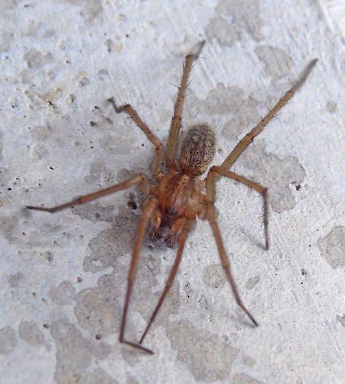 Best 25+ Spider Identification Ideas On Pinterest