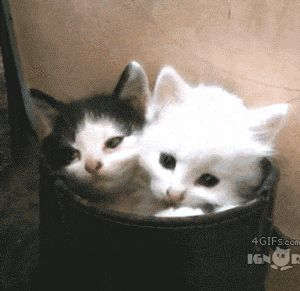 Cutest Yawn Ever? (Possibly -- or its the creepiest -- if there aren't actually 3 kittens in that basket).... you tell me....