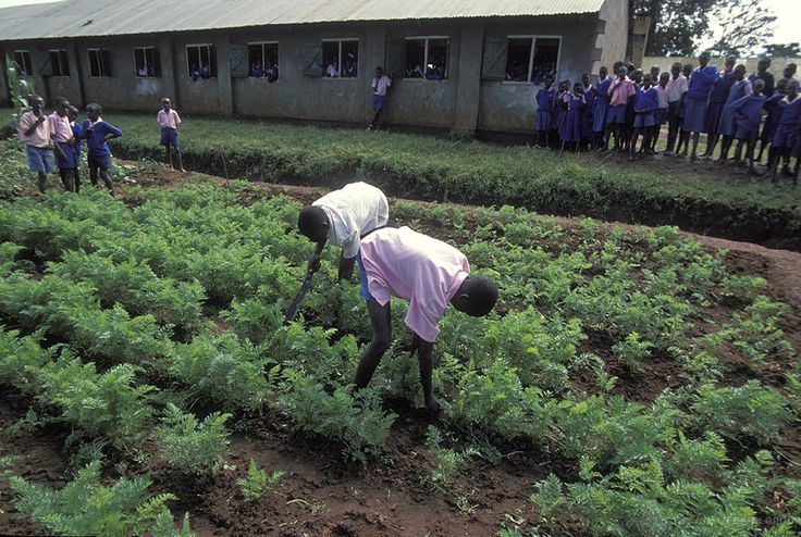 WORLD BANK PEDDLING PRIVATE, FOR-PROFIT SCHOOLS IN AFRICA, DISGUISED AS AID File: Students pick crops outside a world bank school in Kenya. (Flickr / World Bank Photo Collection)