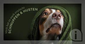 Achtung ansteckend: 5 natürliche Tipps, wenn Dein Hund hustet