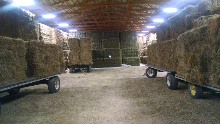 Small Square Alfalfa Bales 10000 Bale S Hay Type
