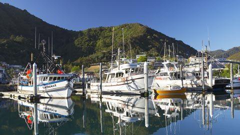 Marina, Picton, Marlborough Sounds - NZ