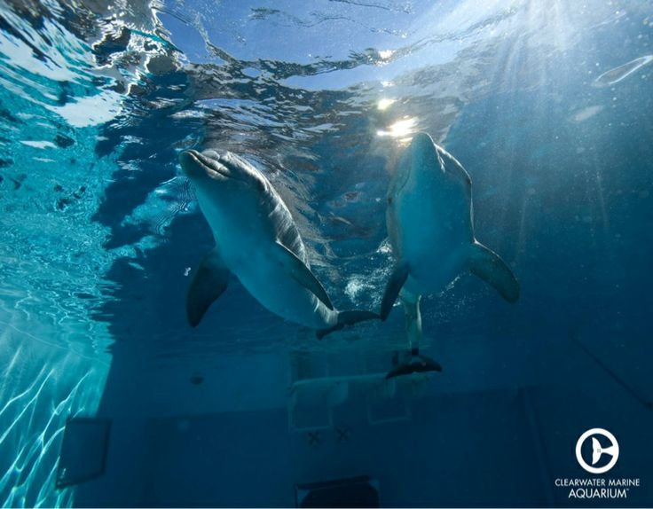 Image Result For Clearwater Aquarium
