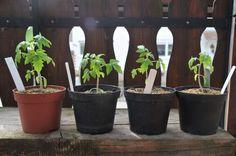 1000 ideas about tomaten pflanzen on pinterest. Black Bedroom Furniture Sets. Home Design Ideas