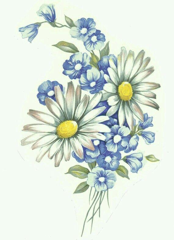 Красотки открытки, картинки композиции цветов ромашки нарисованные
