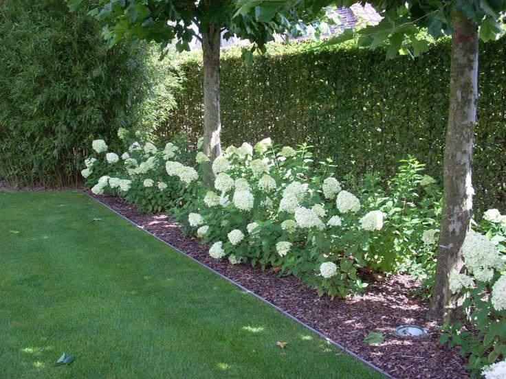 limelight hydrangea as a border showtuin TUIN SFEER