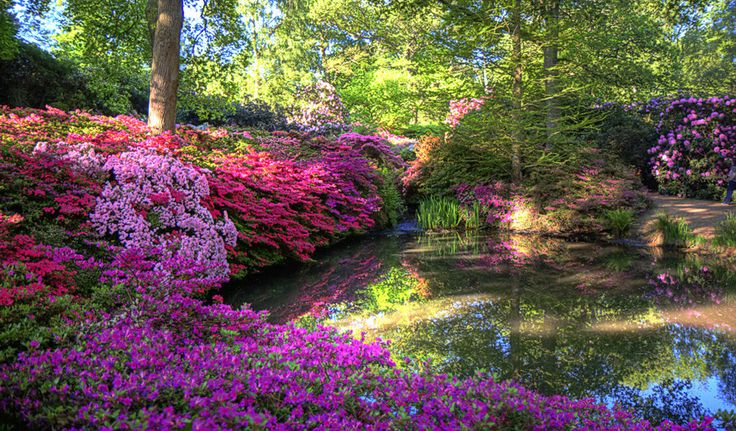 Isabella Plantation, Richmond | 18 Places That Will Make You Fall Back In Love With London