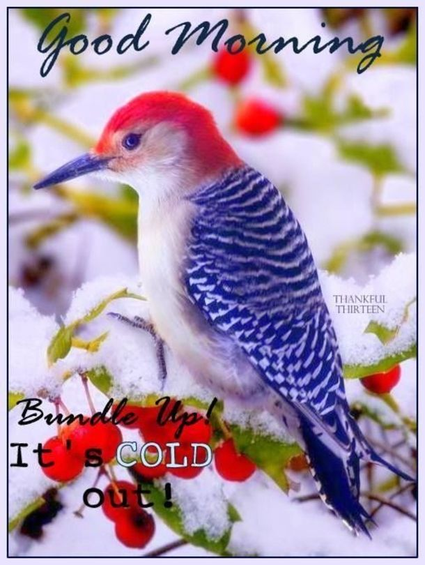 Good Morning On This Cold Day : morning, Christmas, Winter, Morning, Quotes, Winter,, Quotes,
