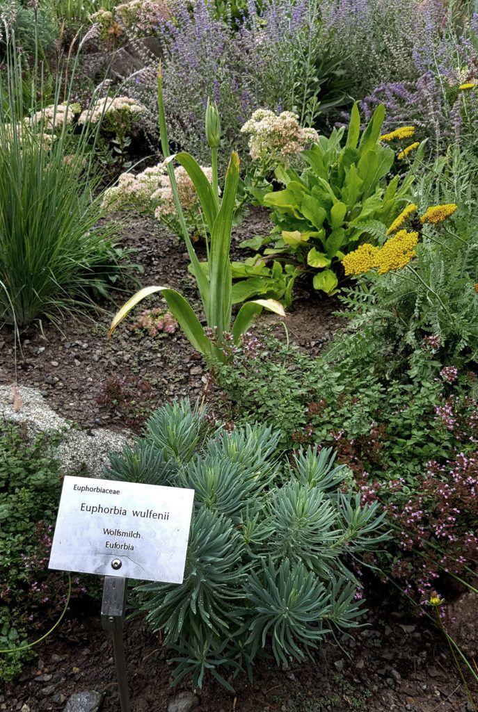 Garten Genuss Rund Um Meran Sudtirol Gruneliebe Giftige Pflanzen Garten Exotische Pflanzen