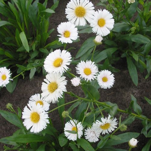 45 Best Jardin Images On Pinterest