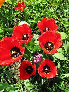 sercem tworzone: Pożegnanie kwietnia...