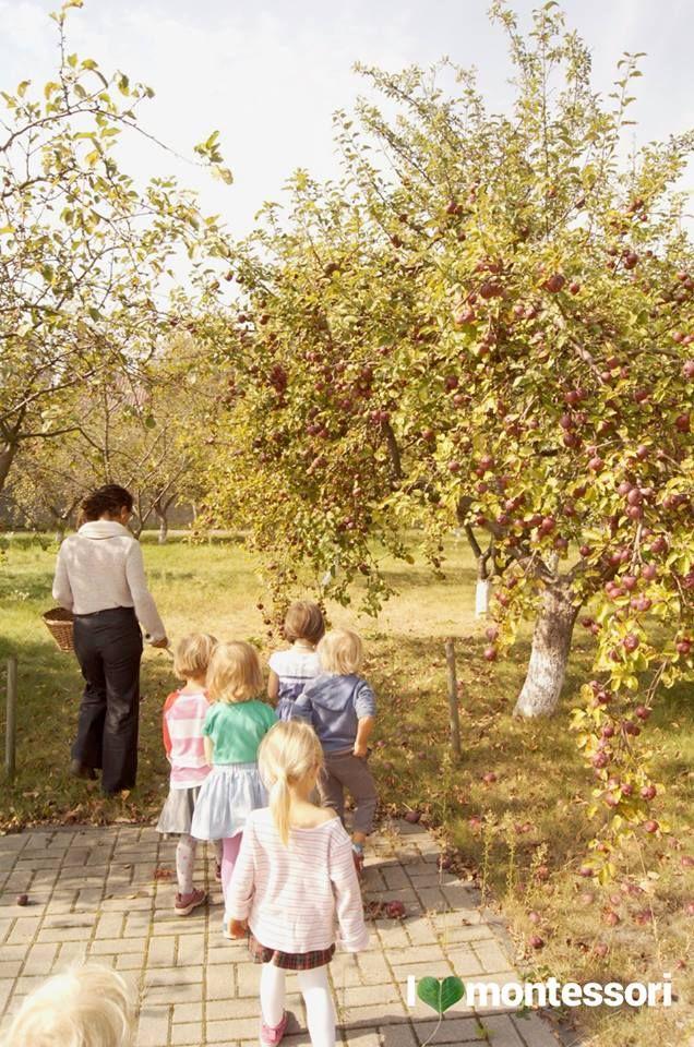ilovemontessori pre-school warszawa apple day